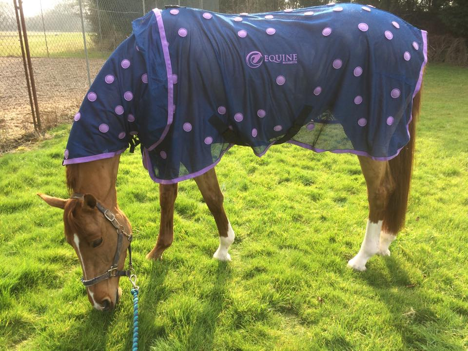 Magnetic Therapy For Horses Magnetix