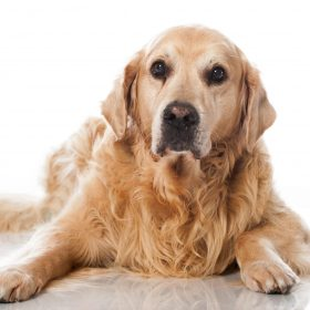 Arthritis is more common in older dogs. Did you know 1 in 5 dogs will at some point suffer from arthritis?