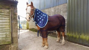 Polly wearing her Equine Magnetix Neck Piece