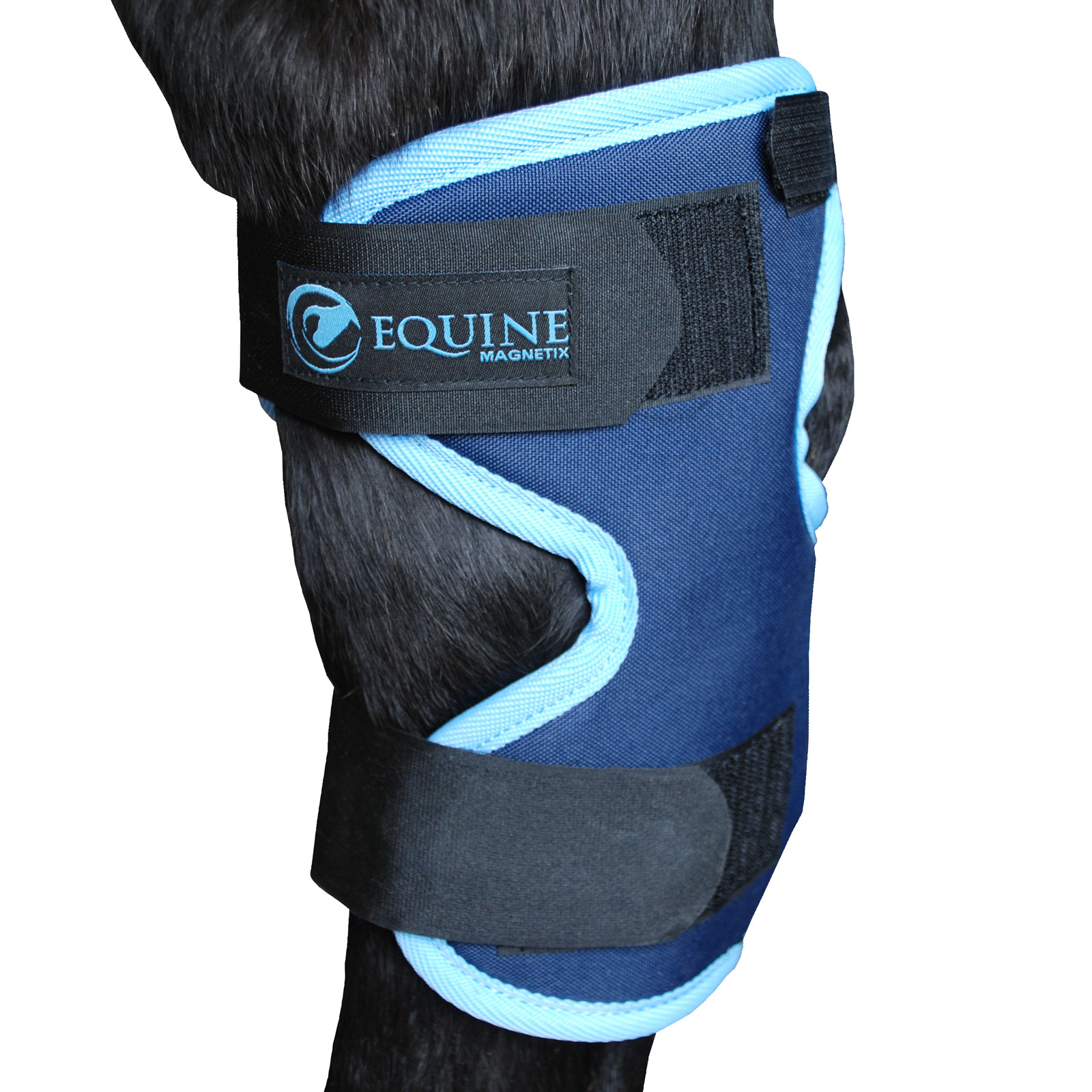Magnetic hock boots in cyan by Equine Magnetix