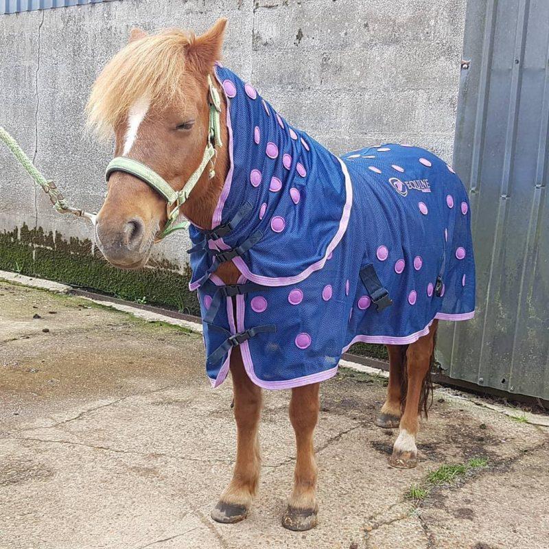 Bea relaxing in her Equine Magnetix horse rug