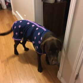 Danny wearing the canine magnetx coat