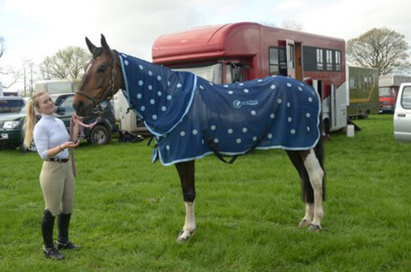 Trebbie wearing his magnetic horse rug
