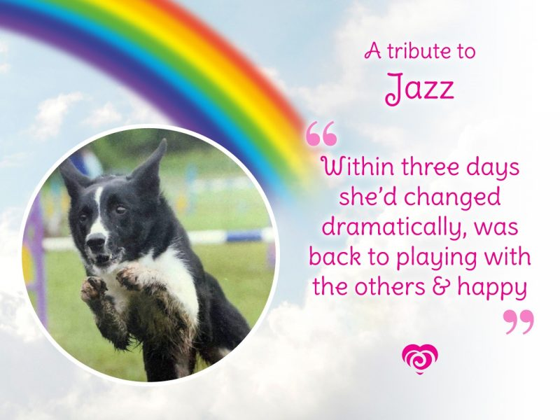 In the Spotlight featuring Jazz - Within three days she'd changed dramatically, was back to playing with the others and happy