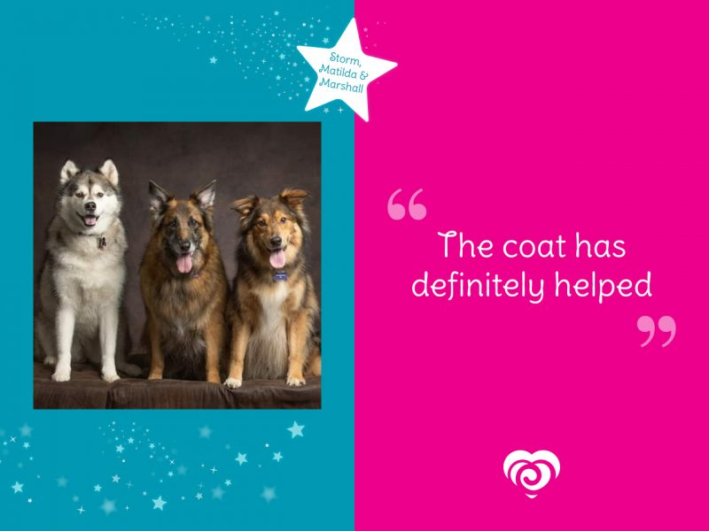 Storm, Matilda and Marshall in the Spotlight - Have all benefited from their magnetic dog coats