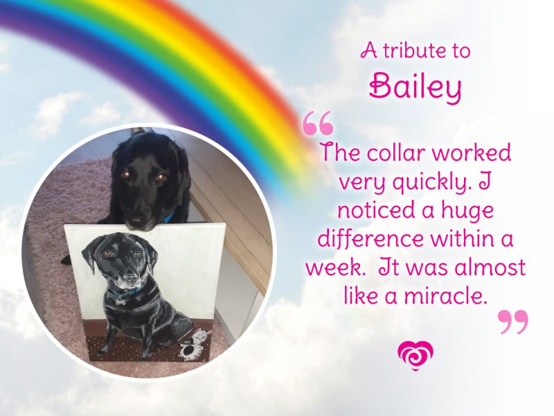 A Tribute to Bailey - The collar worked very quickly. I noticed a huge difference within a week. It was almost like a miracle.