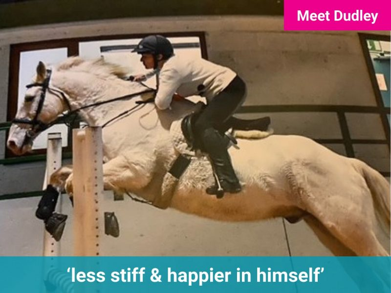 Meet Dudley the horse - he's now less stiff and happier in himself